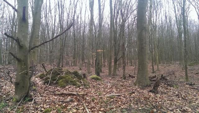 Slumrande träd med urskogskraft som väntar på att vakna