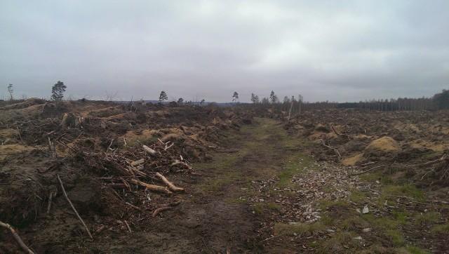 Minns ni 90-talets diskussion om att mtb förstör naturen??