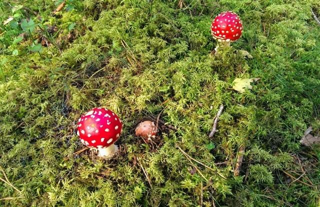 Lite svamp har väl ingen dött av...