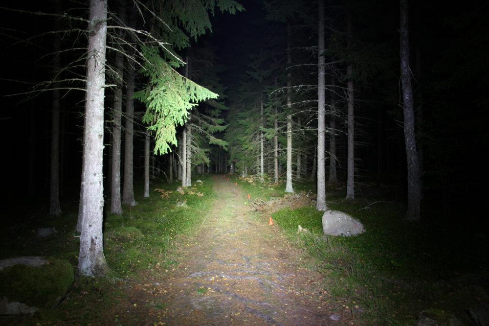 Mila_skog
