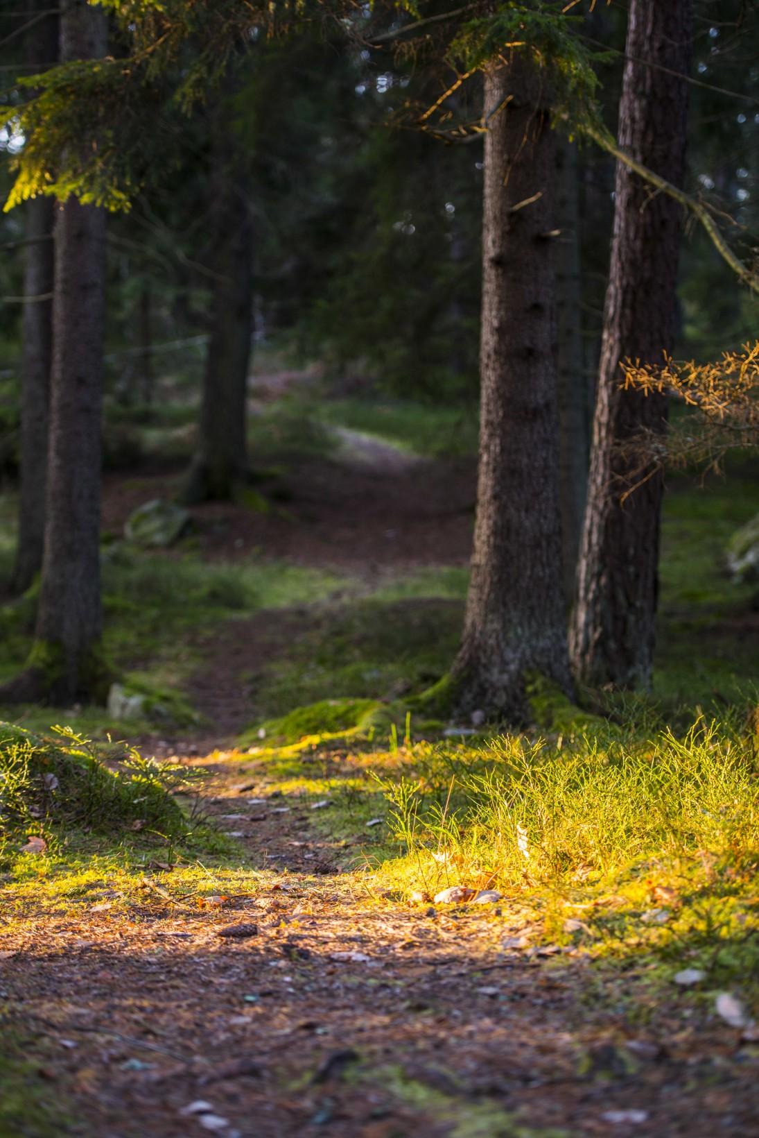 Jesper_Andersson_DSC_5693