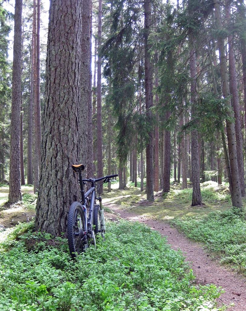 En fröjd för ögat om man är MTB-cyklist!