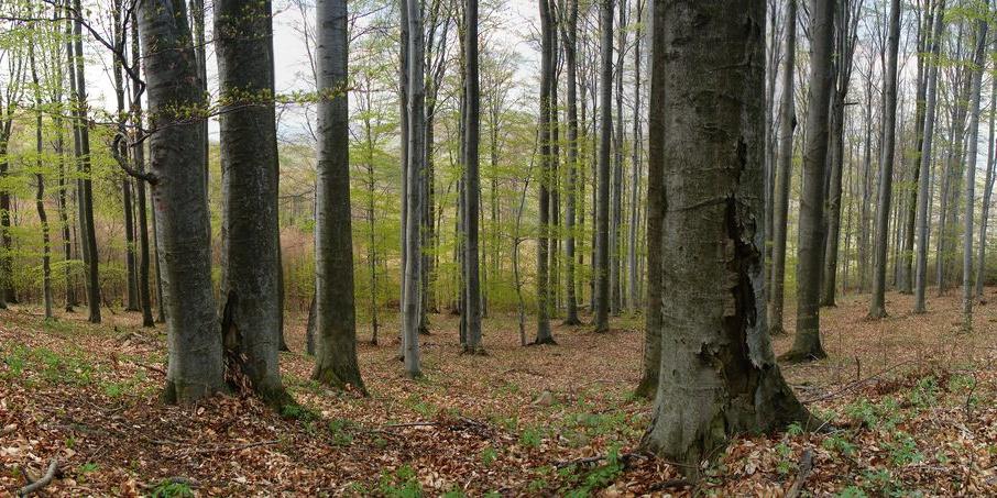 Naturvårdsverkets tolkning av Allemansrätten innefattar ännu inte eMTB. Foto: Benjamín Jarčuška